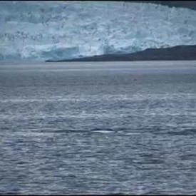Capefarewell-BlueWhales-video