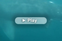 Basking Shark - underwater